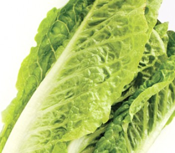 Bunch of lettuce