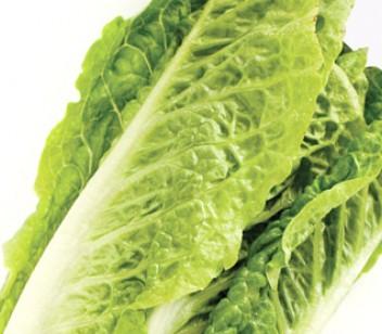 Bunch of lettuce