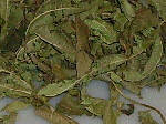 Dried verbena leaves for herbal tea
