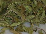 Dried verbena leaves for herbal tea