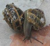 Feeding the Snails