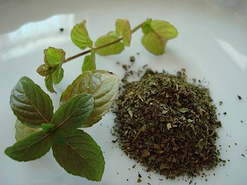 Fresh and Dried Mint